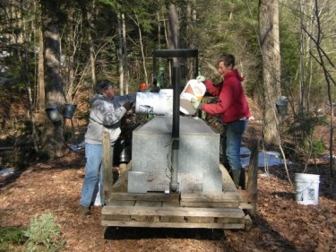 emptying maple sap